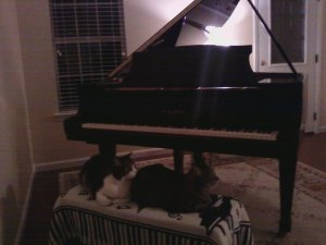Why do cats and the piano go together?